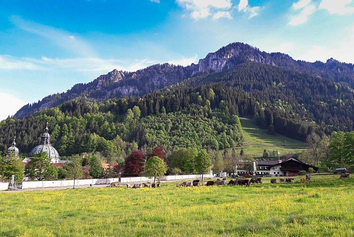 Naturpark Ammergauer Alpen: Altes Handwerk neu entdecken - Schaukäserei Ettal