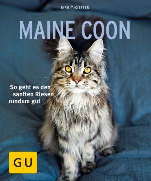 Birgit Kieffer: Maine Coon: So geht es den sanften Riesen rundum gut