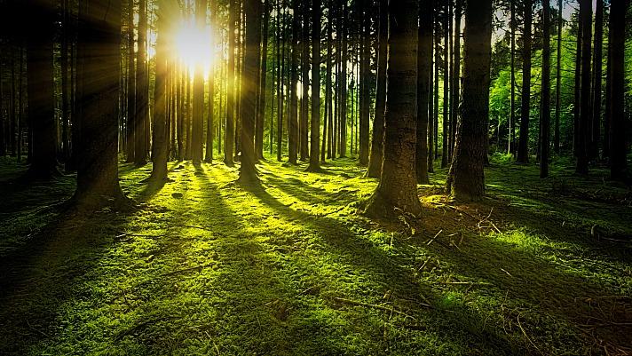 Die heilende Wirkung der Natur: Waldbaden tut Körper und Seele gut