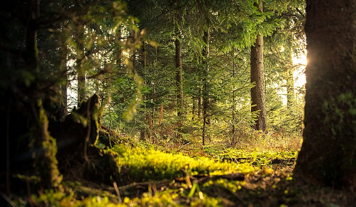 Waldbaden - Die Forschung belegt eine heilende Wirkung
