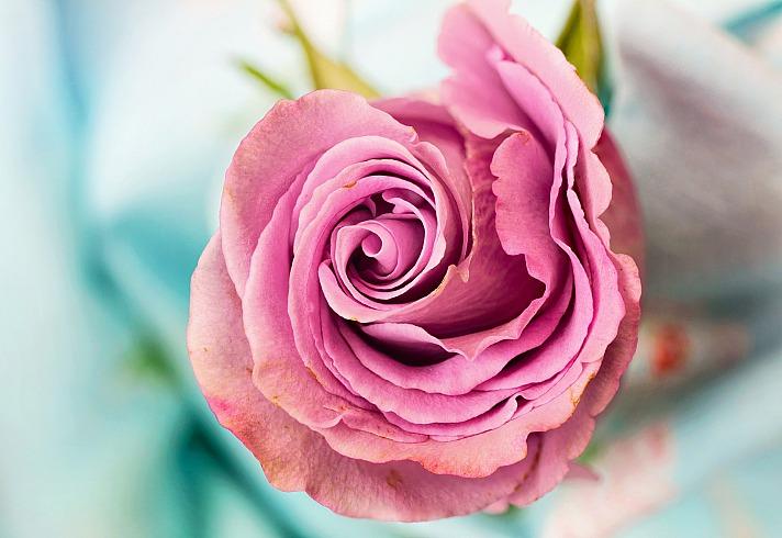 Blumen - welche Bedeutung hat welche Blume genau?