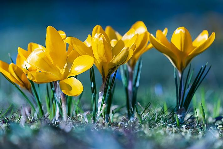Wenn die ersten Frühlingsboten vor die Tür und in die Gärten locken