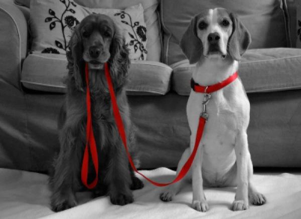 Gina & Gennaro | Haus- und Nutztiere » Hunde | Kim Deutsch / pixelio
