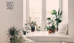 window_daria_shevtsova_930004