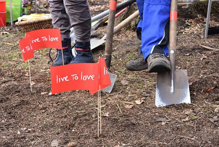 Live To Love: Auch Stieleichen brauchen Abstandsregeln