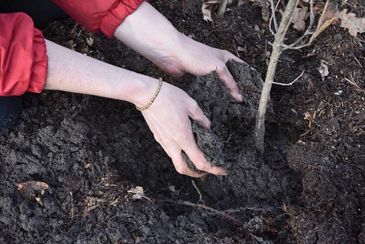 Live To Love: Einen Baum dieser Größe zu pflanzen, das Loch zu graben, ihn einzusetzen und die Wurzel mit Erde zu bedecken, dauert nur ca. 15 Minuten