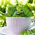 Wildpflanzen sammeln und zubereiten: Informationen und Tipps