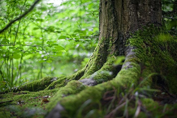 Wie der Wald uns den Stress nimmt - Entspannung und Achtsamkeit in der Natur