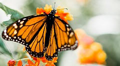 butterfly_adrianna_calvo_2342794