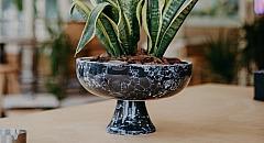 plant_pot_taha_samet_arslan_9756154