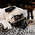 Wozu wir alles aus reiner Liebe zum Haustier bereit sind