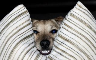 Schalk im Nacken | Haus- und Nutztiere » Hunde | F.H.Me. / pixelio