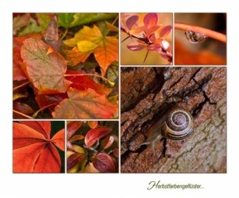 Herbstfarbengeflüster ... | Landschaft & Natur » Blätter & Blumen | Renate Franke / pixelio