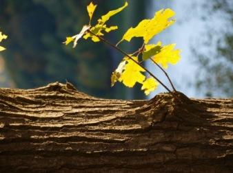 Ein neues Ästchen | Landschaft & Natur » Bäume | Carolin Daum / pixelio