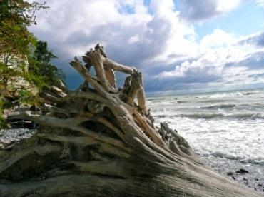 Baumstrunk | Landschaft & Natur » Strand & Meer | Gabi Schoenemann / pixelio