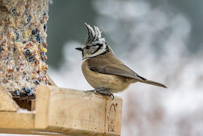Vogelhaus winter jagdi/pixabay 5