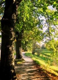 Bäume am Wegesrand | Landschaft & Natur | Rotraut Doell-Tadday / pixelio