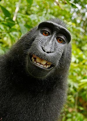 Lachen WikiImages/pixabay 96