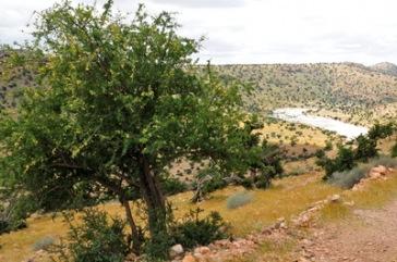 Argan-Baum   Städte » Afrika   Dr. Klaus-Uwe Gerhardt / pixelio