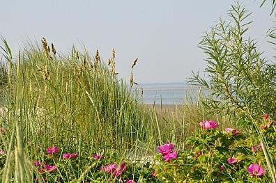 Hauke Nissen - An unserem Naturstrand
