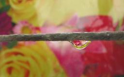 Bei uns regnet es Rosentropfen | Kunst & Kultur » Fotokunst | Karin Jung / pixelio