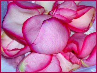 DÄUMELINCHENS BETTCHEN | Blätter & Blumen » Rosen | Rike / pixelio