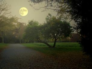 Mystische Parklandschaft | Landschaft & Natur | SarahC. / pixelio