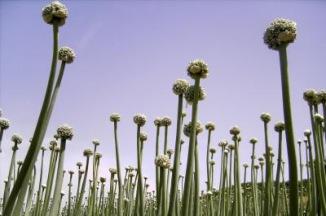 Pflanzen vom andren Stern | Landschaft & Natur » Felder & Wiesen | ich / pixelio