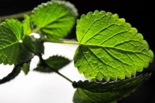 heilpflanzen helfen bei bluthochdruck lebe liebe. Black Bedroom Furniture Sets. Home Design Ideas